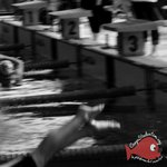 S8 - Compétition Nationale Interunif Natation